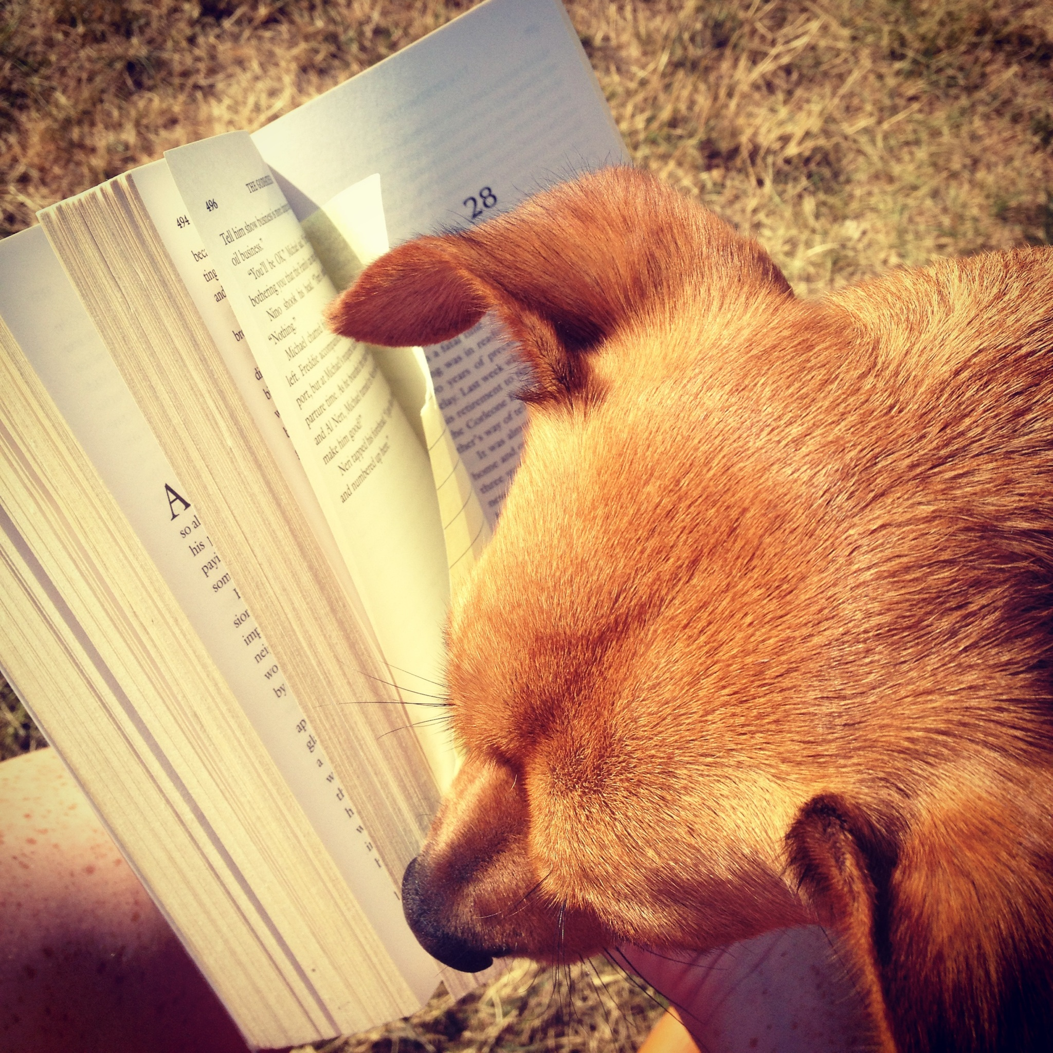 Dog Ate My Book